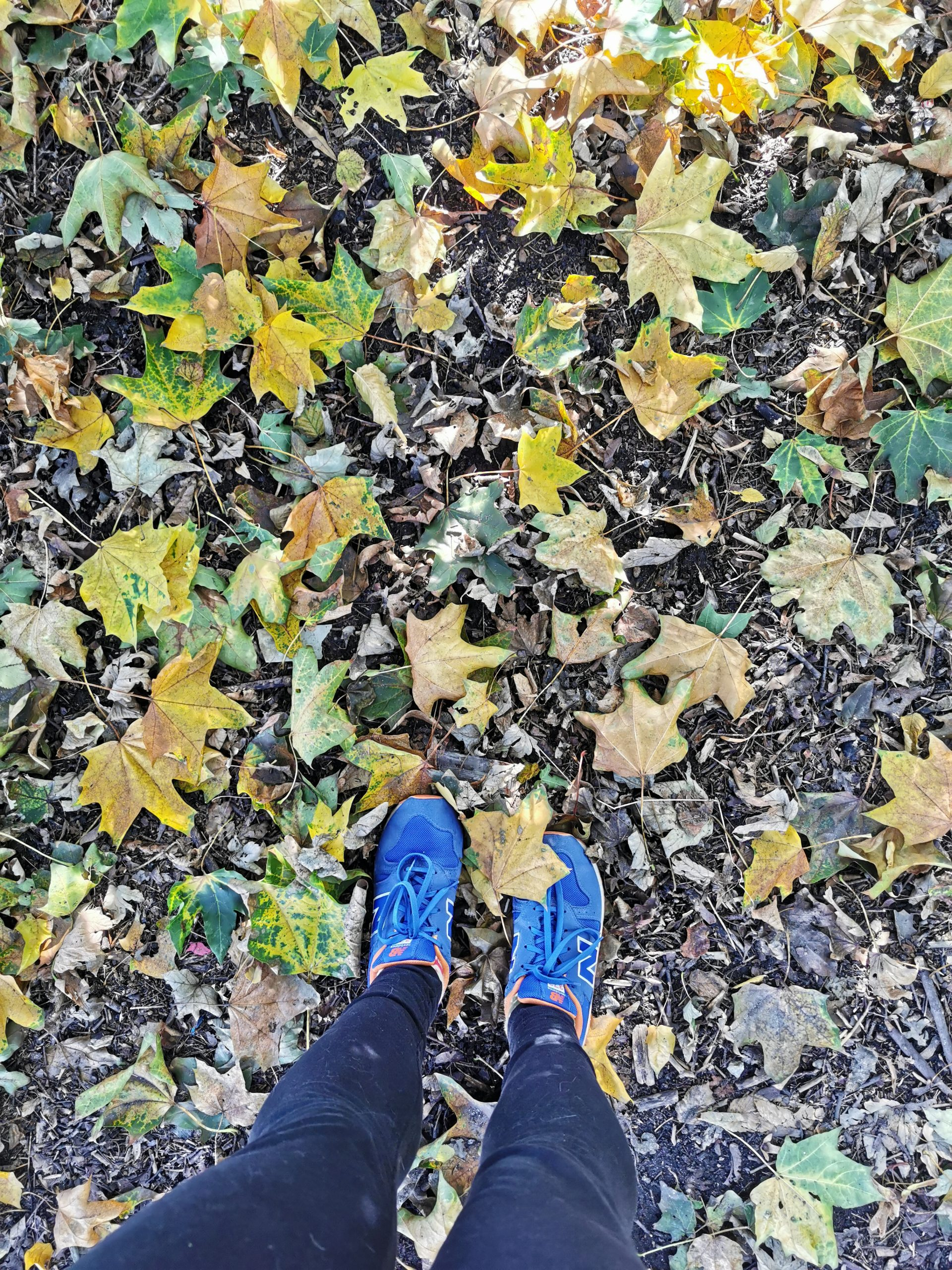 How to thrive in autumn